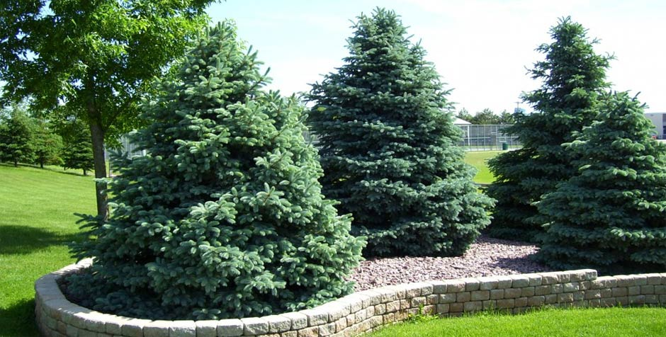 We install trees and shrubs for your home or business in the South Metro area